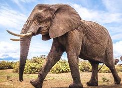 elephant2-635x395_edited.jpg