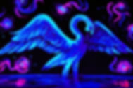 Swan Midnight.JPG