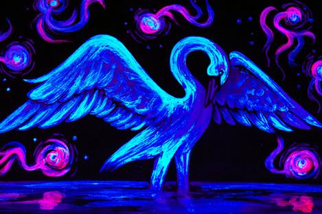 Swan at Midnight