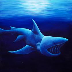 Basking Shark2
