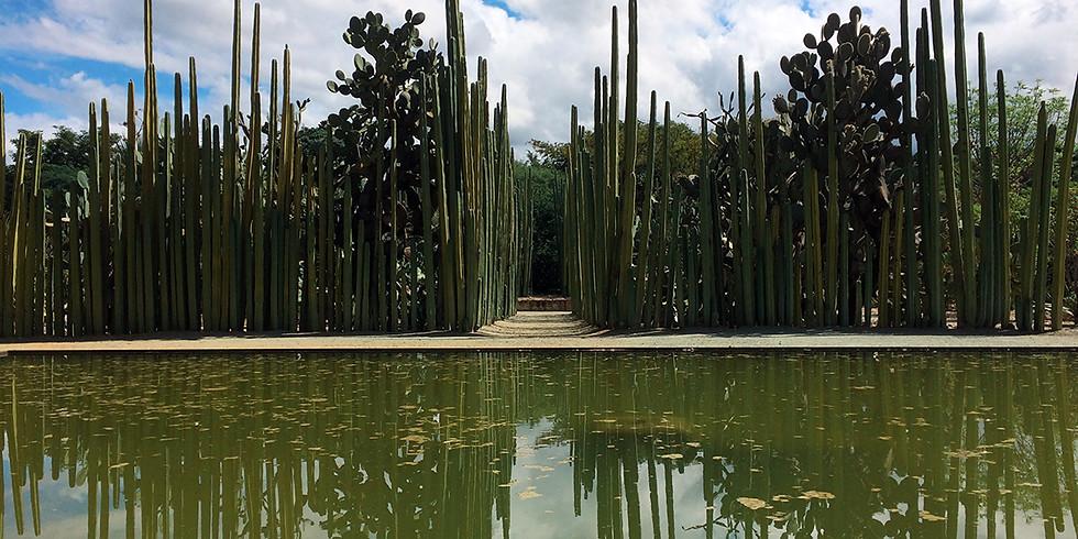 Visita Guiada en el Jardín Etnobotánico de la Ciudad de Oaxaca GRUPO 1