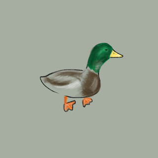 This is not a duck