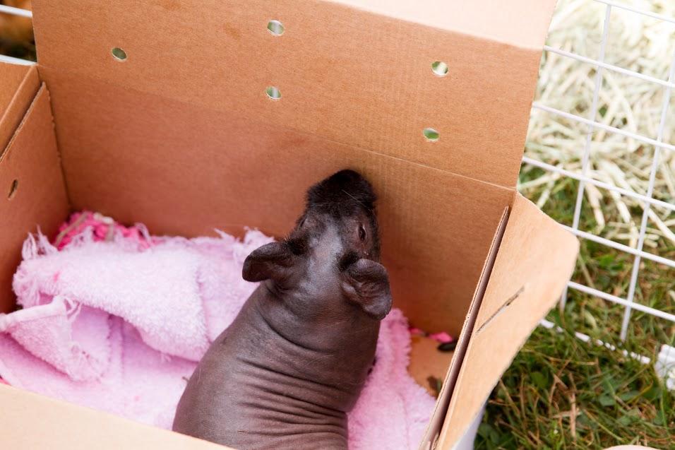Travel Piggy