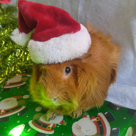 Billt At Christmas