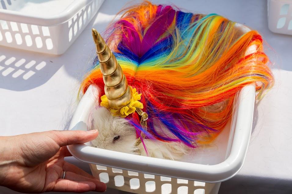 Rainbow Unicorn Piggy