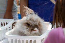 Fluffy Bunny - Copy