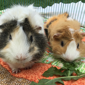 Snowey and Emmett-Picklez