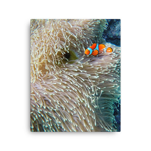 Clown Fish, Great Barrier Reef | Canvas