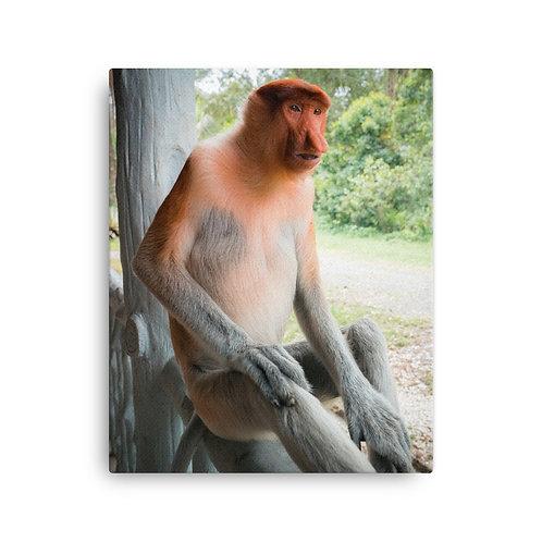 Shocked Proboscis Monkey, Borneo | Canvas