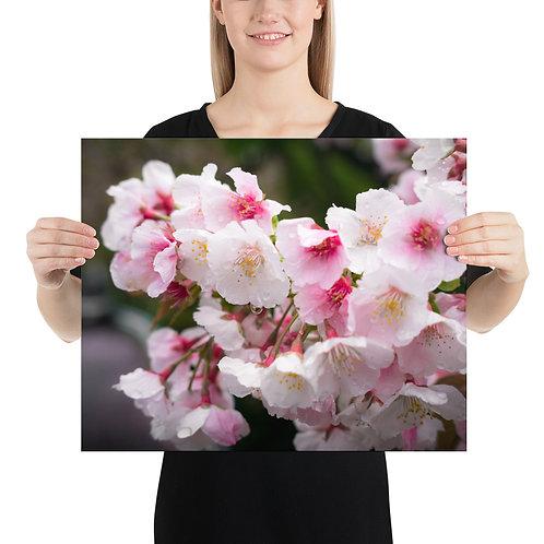 Sakura | Print