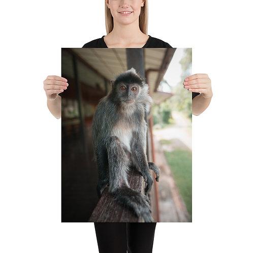 Silver Monkey, Borneo | Print