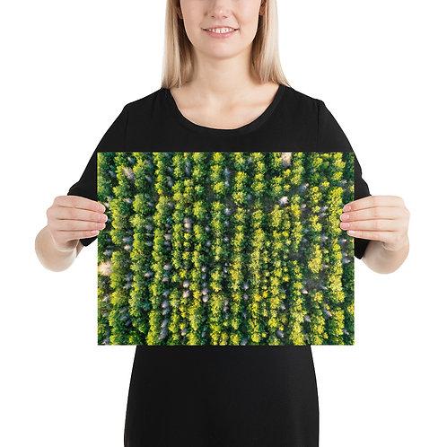Icelandic Trees   Print