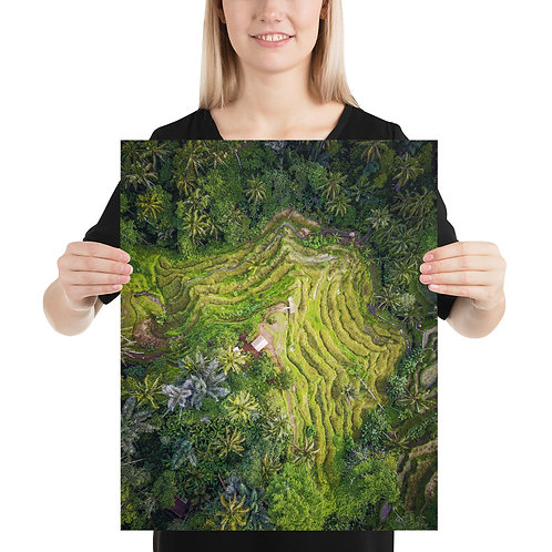Tegallalang Rice Fields   Print