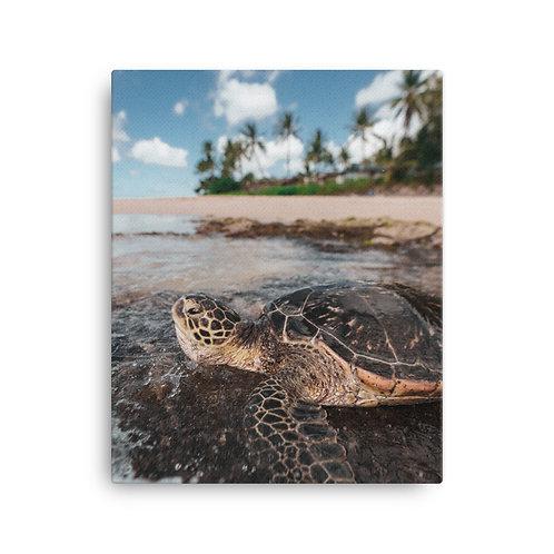 Sea Turtle Hawaii | Canvas
