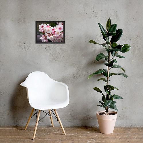 Sakura | Framed
