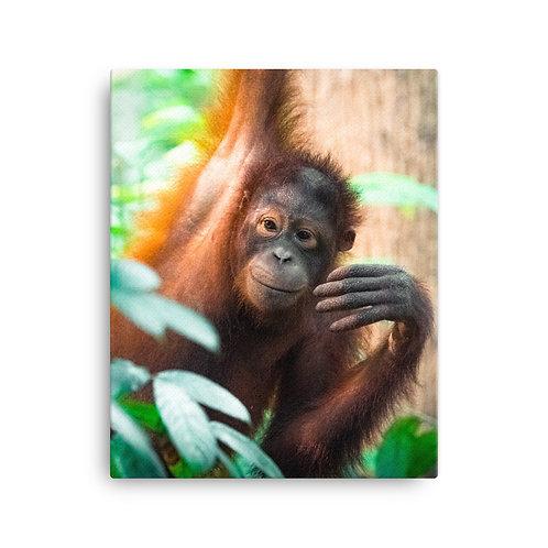 Sepilok - Orangutan, Borneo | Canvas