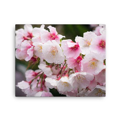 Sakura | Canvas