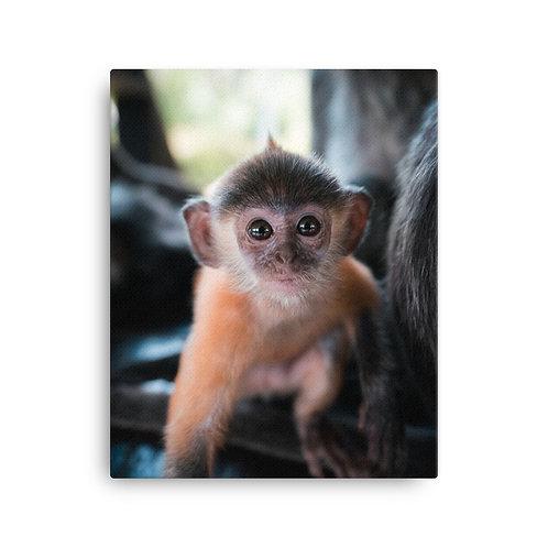 Baby Silver Monkey, Borneo | Canvas