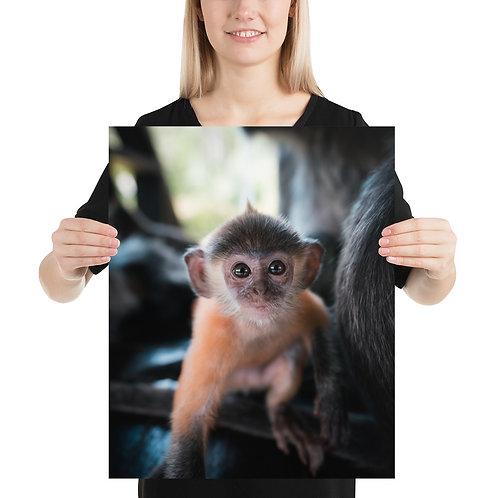Baby Silver Monkey, Borneo | Print