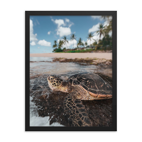 Sea Turtle Hawaii | Framed