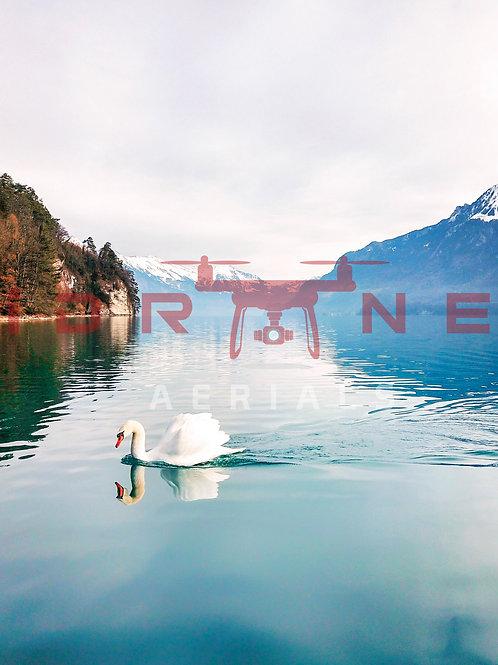 Swan | Interlaken, Switzerland