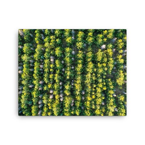 Icelandic Trees   Canvas