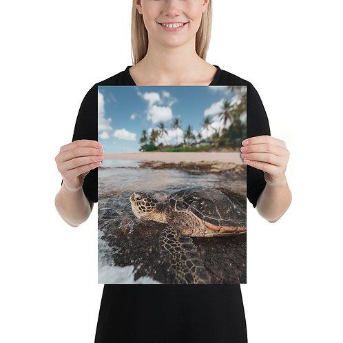 Sea Turtle Hawaii | Print