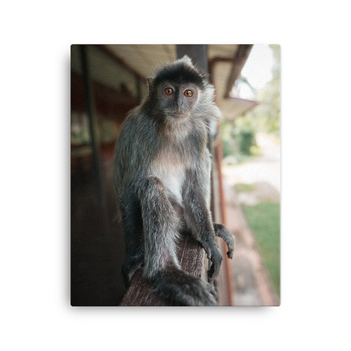 Silver Monkey, Borneo | Canvas