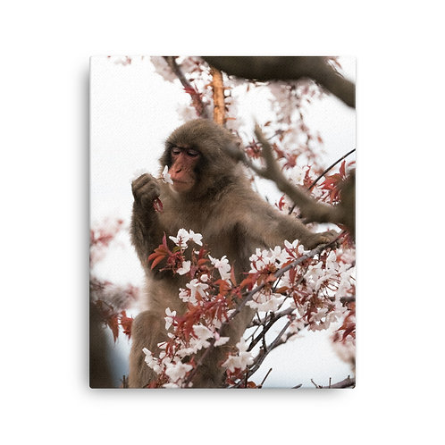 Monkey & Sakura, Kyoto | Canvas