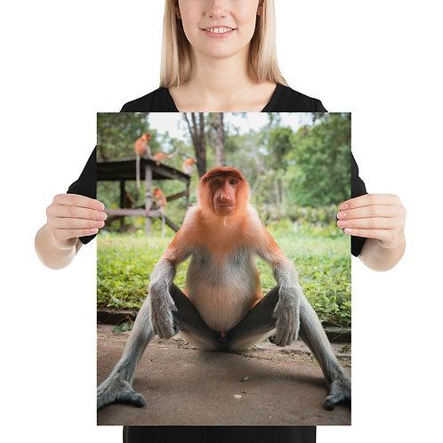 Proboscis Monkey, Borneo   Print