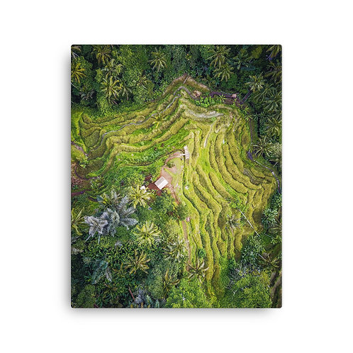 Tegallalang Rice Fields, Bali | Canvas