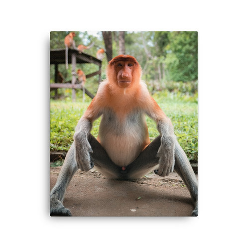 Proboscis Monkey, Borneo | Canvas