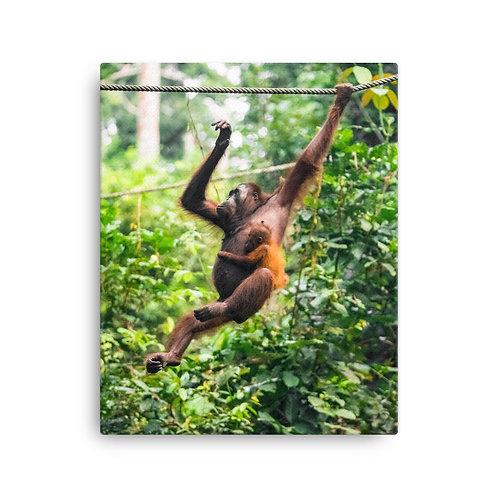 Mimi - Orangutan, Borneo | Canvas
