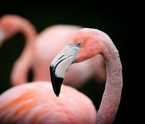 Dare to be different flamingo