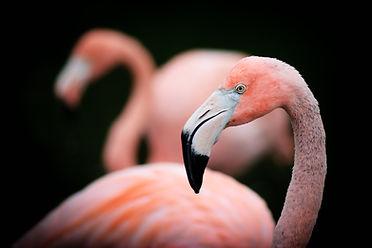 Ptáci - DNA testování pohlaví