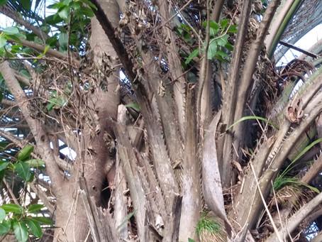 こしきの…今日 ✽この木 何の木 気になる木✽