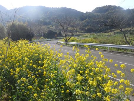 こしきの…今日 ✽県道348号線も春の装いに!✽