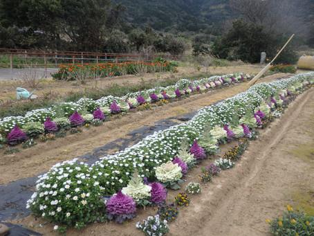 こしきの…今日 ✽優しい花々✽