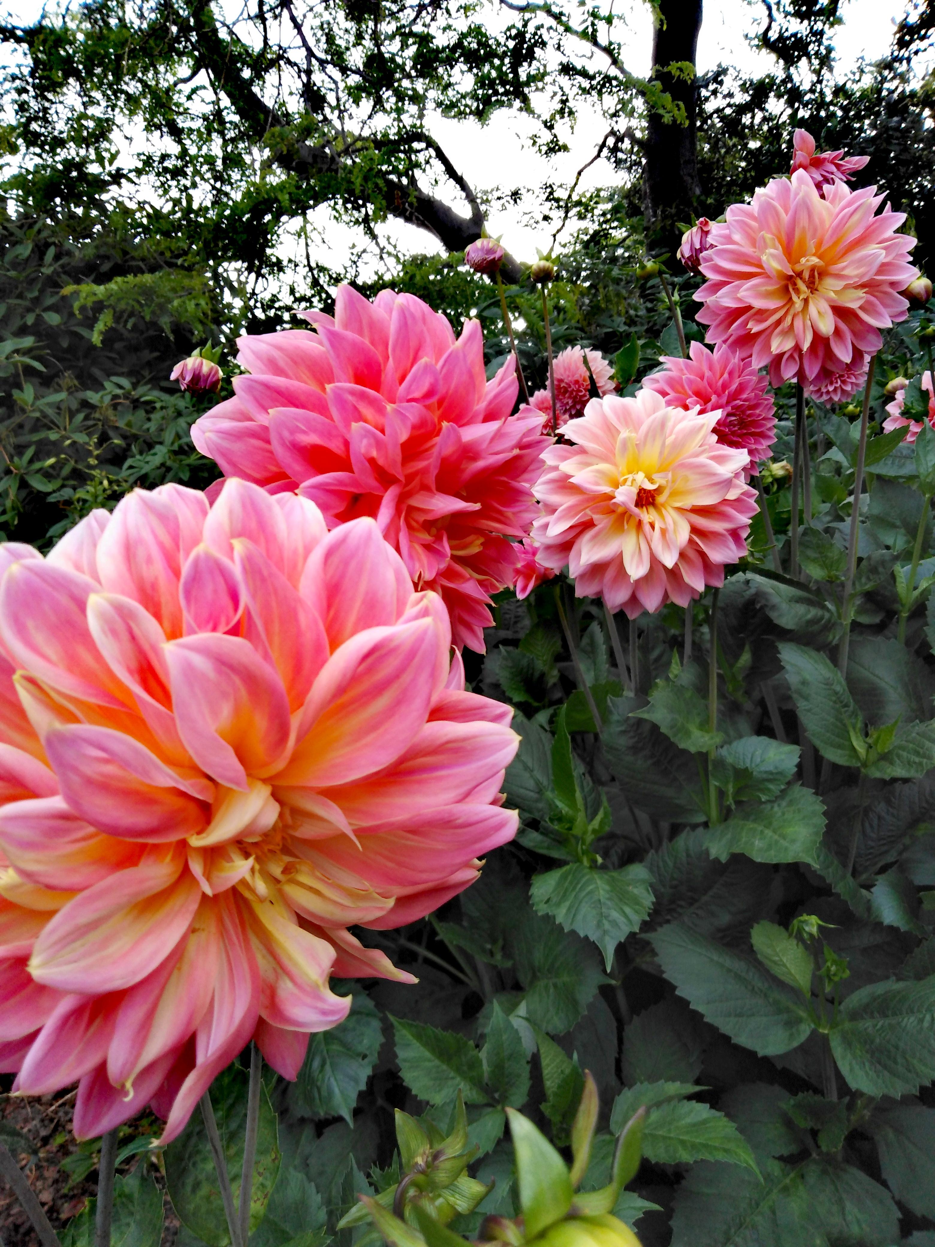 Botanic Garden - Timaru