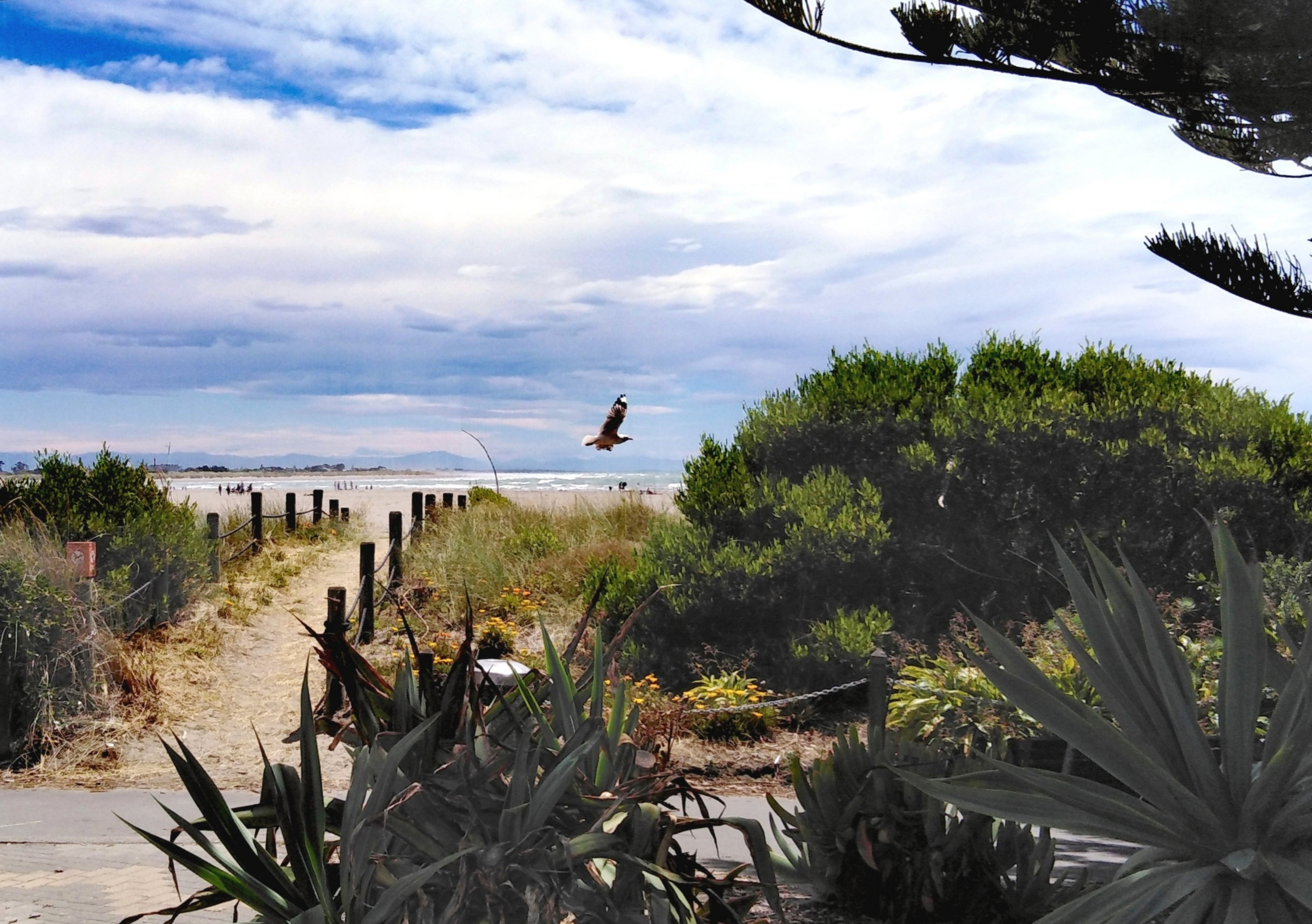 Sumner Beach - Christchurch