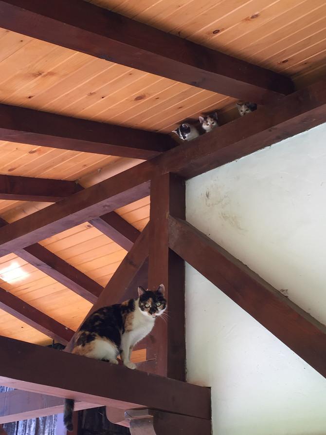 И новото потомство в семейство Котки