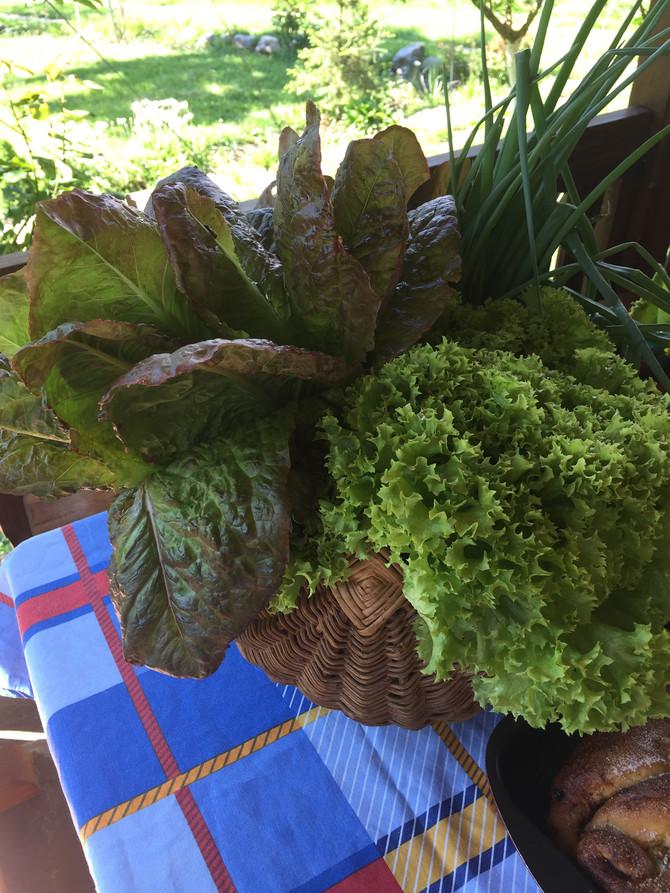 Първите пролетни зеленчуци от градината