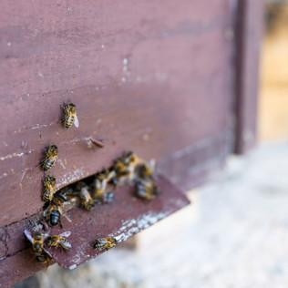 Bringing pollen