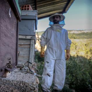 Bees landing