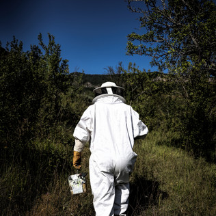 Time for beekeeping