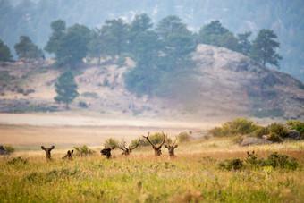 Deer and buck