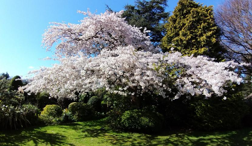 Spring at Hillingford