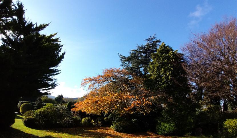 Autumn at Hillingford