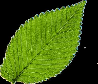 leaf-mito-5051-001-imagilin-pa5051-probi