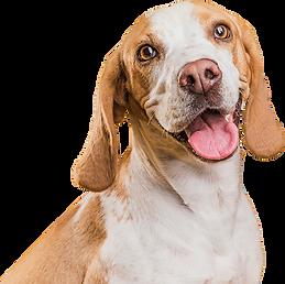 dog-01-mito-5051-001-imagilin-pa5051-pro